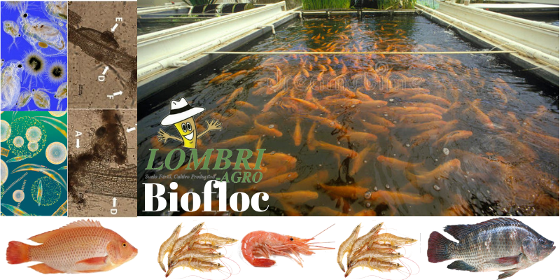 BIOFLOC con LOMBRI-AGRO