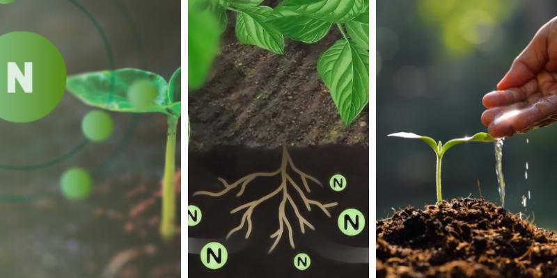 Fertilizante para INICIO del cultivo