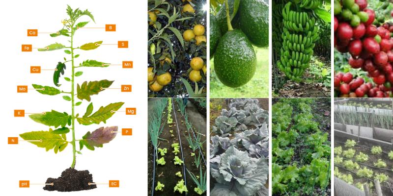 Los Micronutrientes en los Cultivos.