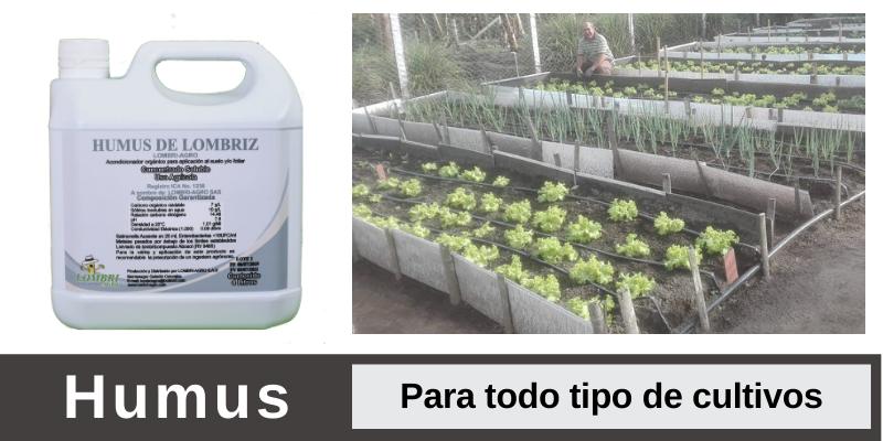 Humus de lombriz liquido o lixiviado en los cultivos